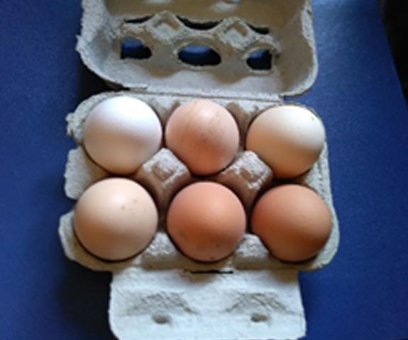Oeufs de poules Terroir d'Azergues